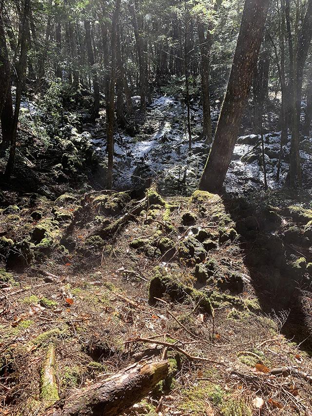 Aokigahra